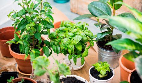 Alquiler y Venta de Plantas