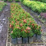 venta de plantas (2)