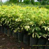 venta de plantas (4)