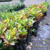venta de plantas (5)