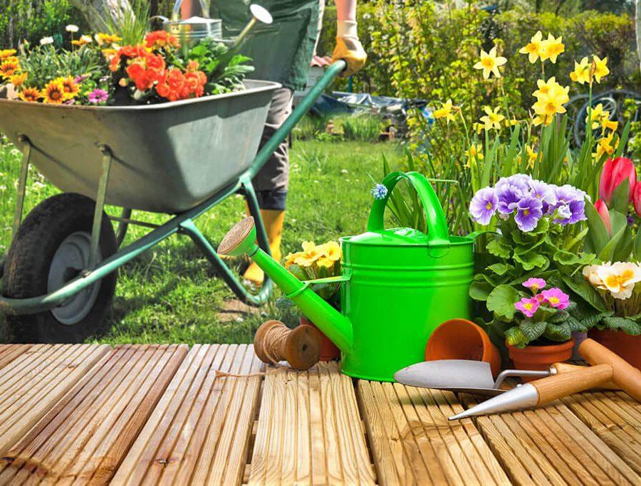 Los 10 consejos básicos para el cuidado del jardín